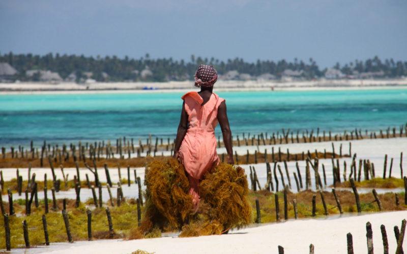 Cueilleuse d'algues sur la plage de Jambiani, Zanzibar