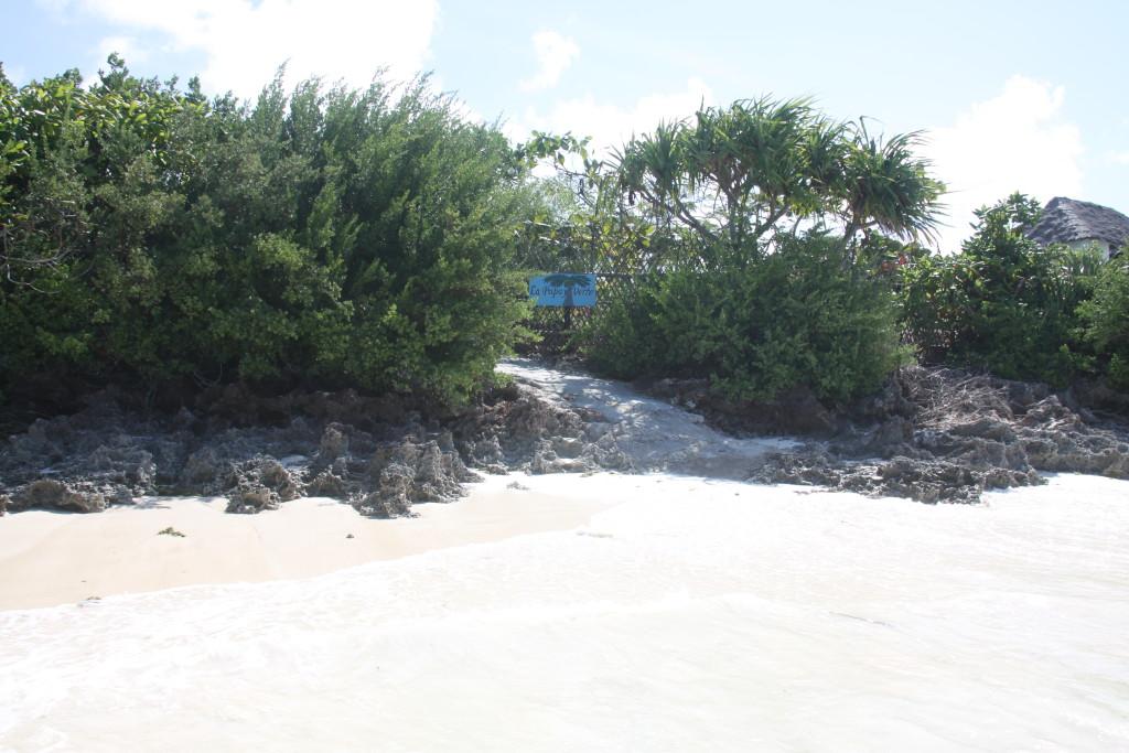 zanzibar-jambiani-papaye-verte-chambre-hotes-guesthouse-logement-hotel-4